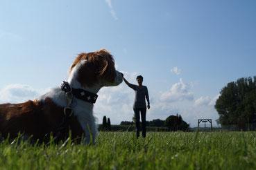 Hundevermittlung in der Hundepension Asmann