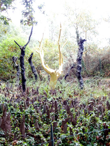 Goldener Baum, Bretagne