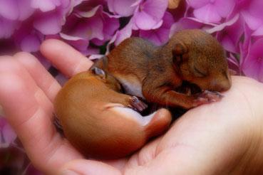 Eichhörnchen Hanni und Nanni bei der WiTAS