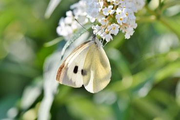 Leichtigkeit durch Mohr Training wie der Schmetterling