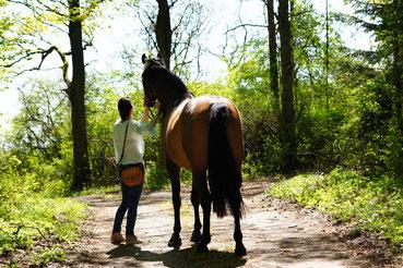Nina Folle Pferd Carli Spaziergang Wald Tierkommunikation Tierfotografie Pferdetraining
