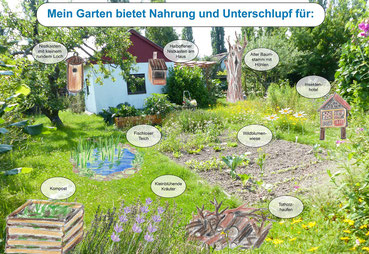 Quiz rund um den Lebensraum Naturgarten