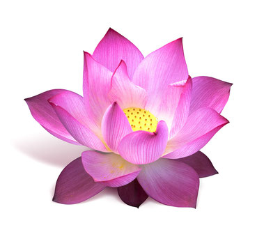 What is lotus the lemongrass were ponds of different colored lotus flowers outside his window with pink white and blue flowers symbolizing the three different types of people mightylinksfo