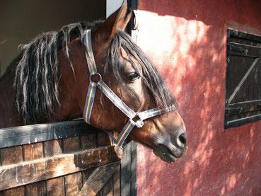 Transporte de caballos Madrid, transporte de caballos barato, transporte de caballos españa, transporte de equinos madrid