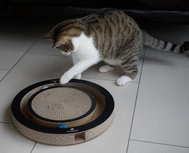 Katze Kasi hat Spaß mit der Bällebahn