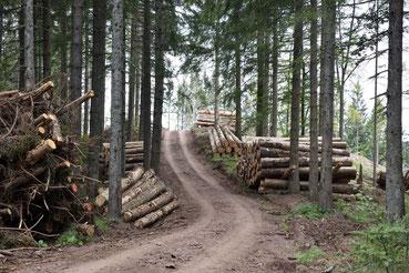 Lager mit Käferholz im Schwarzwald