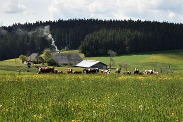 Alter Bauernhof im Schwarzwald