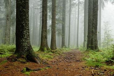 Waldweg auf dem Brend bei Furtwangen