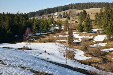 Schneeschmelze im Frühling (Schwarzwald bei Schonach)