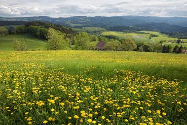 frühlingschwarzwald