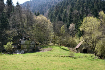 Frühling im Simonswald