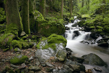 Bachlauf im Hochschwarzwald