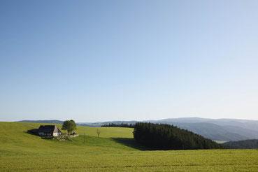 Der Schwarzwald im Frühherbst (bei St. Peter)