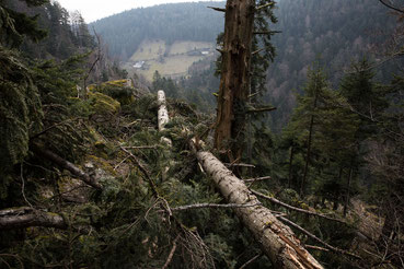 Windbruch im Schwarzwald