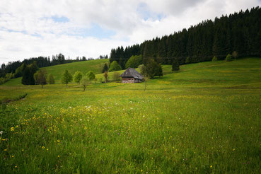 Kleines Bauernhaus im Frühling,  bei Furtwangen im Schwarzwald