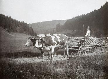 Ochsenkarren mit Fuhrmann im Schwarzwald