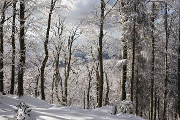 Winterlandschaft bei Waldkirch im Schwarzwald