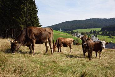 Schwarzwalddorf Schönenbach