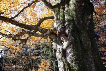 Balzer Herrgott bei Gütenbach im Schwarzwald, im Herbst