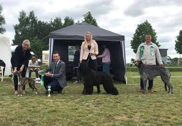 SCOTTISH DEERHOUNDS FCI ZUCHT in Deutschland! Erfolgreiche Deerhounds aus der Zucht von Alshamina-VDH Züchterin Nadja Koschwitz!