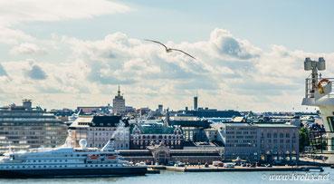Хельсинкская чайка