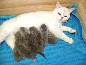 Bellas Kitten, 1,5 Wochen (geb. 13.5.14)