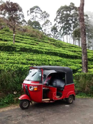 Tuktuk en thee velden in Nuwara Eliya Sri Lanka