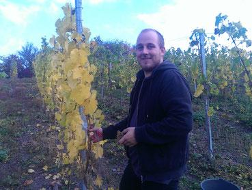 Wiltinger Wein, Saarweingut Felix Weber, Wiltingen, Mosel Riesling, Saarwein, Saar-Riesling-Roots