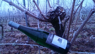 Wiltinger Wein, Saar-Riesling-Roots, Weingut Felix Weber, Mosel Riesling Bereich Saar