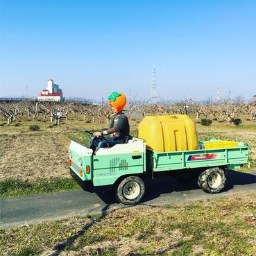 富有柿の農作業