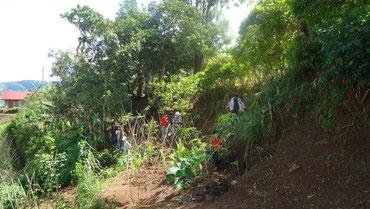校舎の左斜面にある学校の庭。ベンケットコーヒーとカリアンドラを植樹