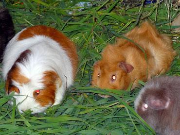 Prinzessin Isi mit ihrem heißblütigen Verehrer Flo und Wendi