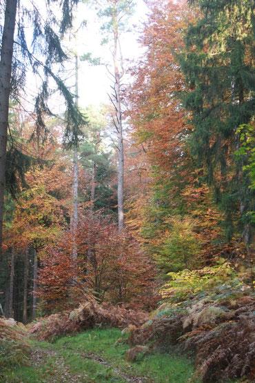 zwischen Spielberg und Ittersbach