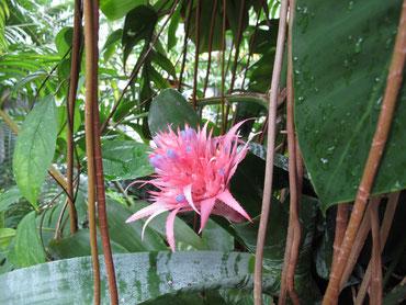 いま温室で咲いています