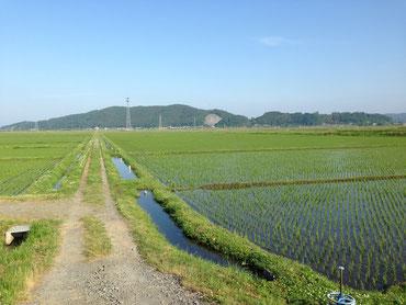 大森仮設団地の周囲には、緑豊かな田園風景が広がっています。