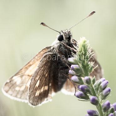 Angesichts. Bildnisse von Insekten