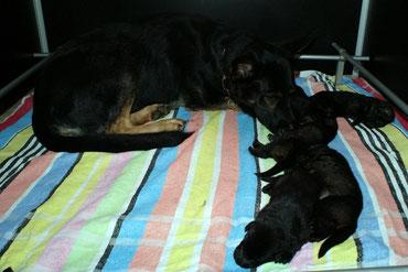 Ares, der Babysitter