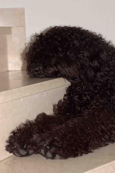 Schlafposition auf der Treppe. Scheint bequem zu sein, und kühl zugleich. Auf jeden Fall strategisch perfekt, um alles im Haus im Blick zu haben.