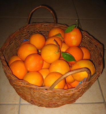. . .  die eigenen Orangen