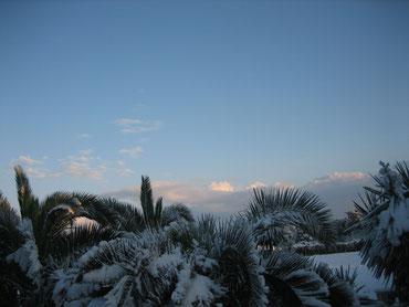 Unser Palmengarten unter einer dicken Schneedecke ! (Jahreswechsel 2014/2015)
