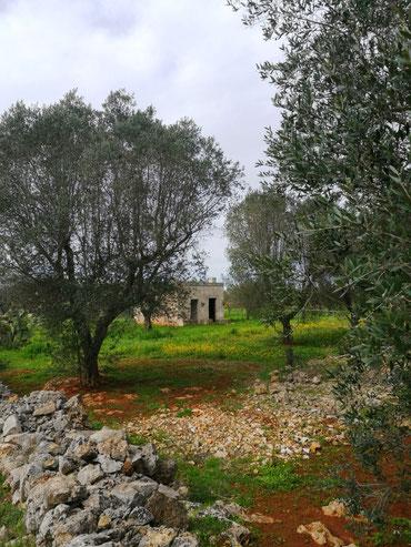 """""""rustico"""" mitten im Olivenhain gelegen im März 2018"""