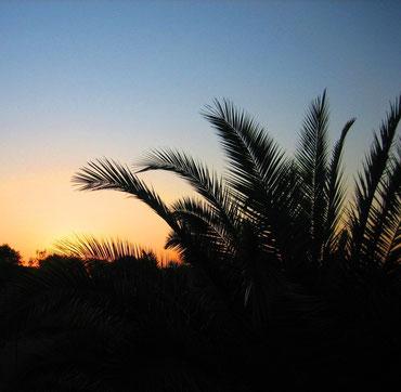 Sonnenuntergang über dem Palmengarten des Anwesens
