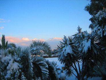Unser Palmengarten von Schnee bedeckt