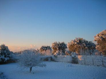 Unsere Südwiese - von Schnee bedeckt ! (Jahreswechsel 2014/2015)