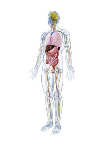 Parodontitis kann Folgen für den gesamten Organismus haben