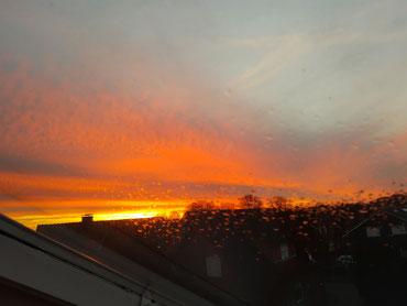 Blumen im Dezember