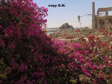auf der Insel Angilikia - der Neu-Philae Tempel