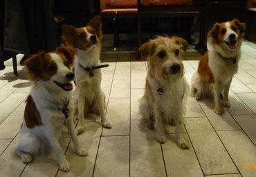 Dolly, Debbie-Maya, Dipsy und Chiva