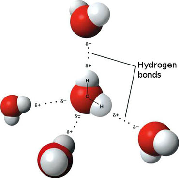 3D Illustration of Hydrogen Bonds in Water