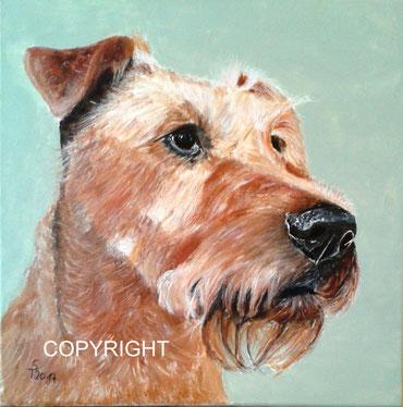 Hundeporträt: Kopfporträt von Irish Terrier , Tiermalerei, gemalte Tierportraits nach Fotovorlage, Tiere zeichnen lassen
